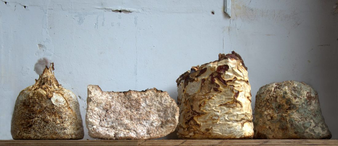 Building with Mushrooms | | Critical Concrete